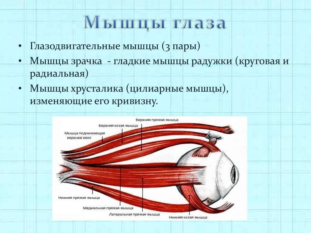 Как тренировать мышцы глаз