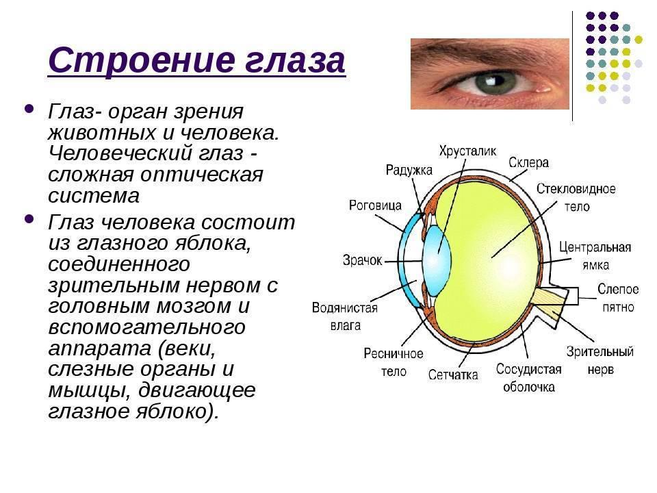 зрение норма