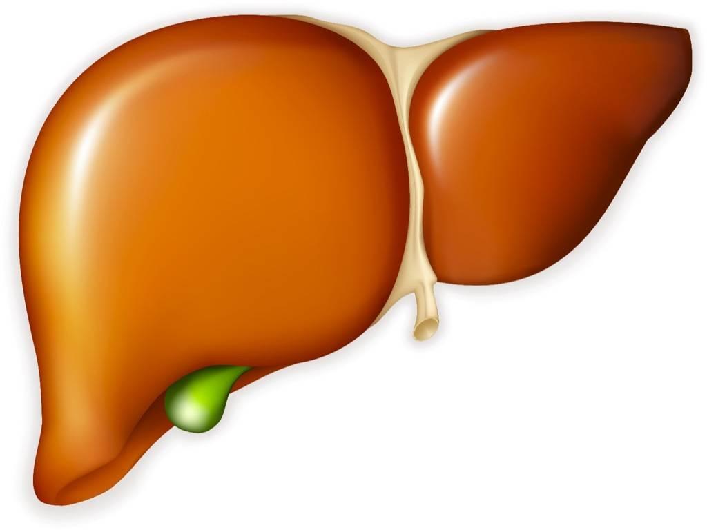 Лечение рака печени народными средствами в домашних условиях