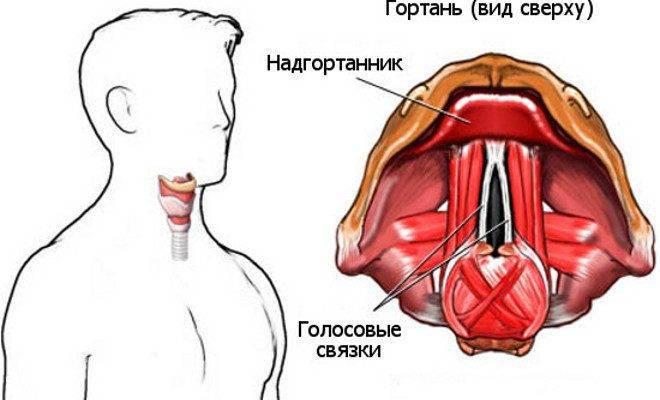 Парез и паралич гортани: симптомы и методы лечения
