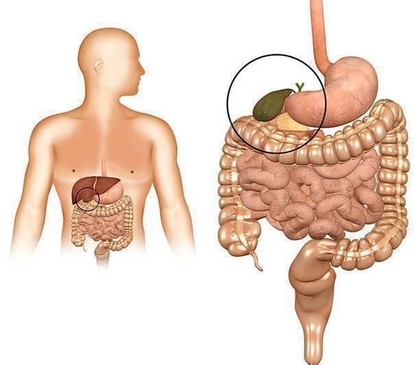Дисфункция печени и поджелудочной лечение - лечение диабета
