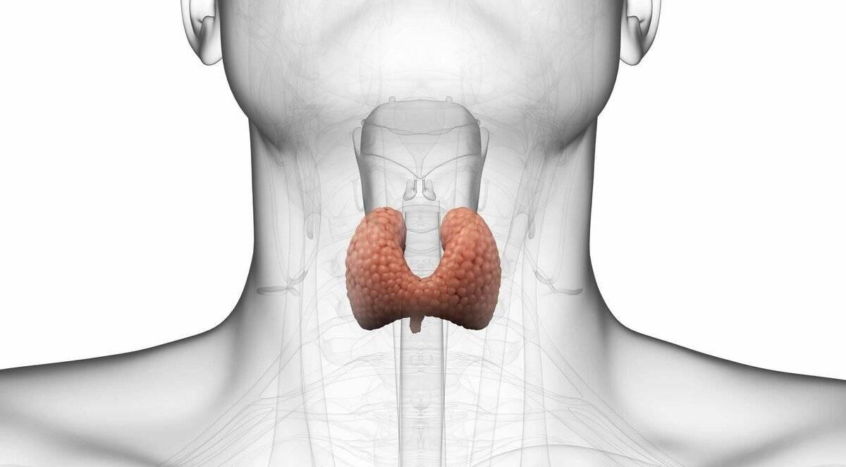 щитовидная железа и мастопатия