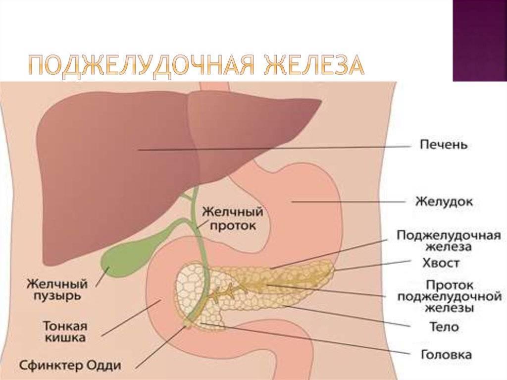 Желчный пузырь: где находится и как болит, симптомы и лечение