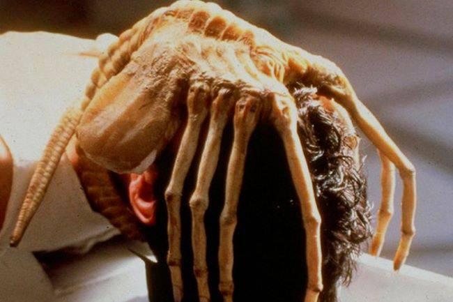 Какие паразиты живут в голове у человека и как от них избавиться
