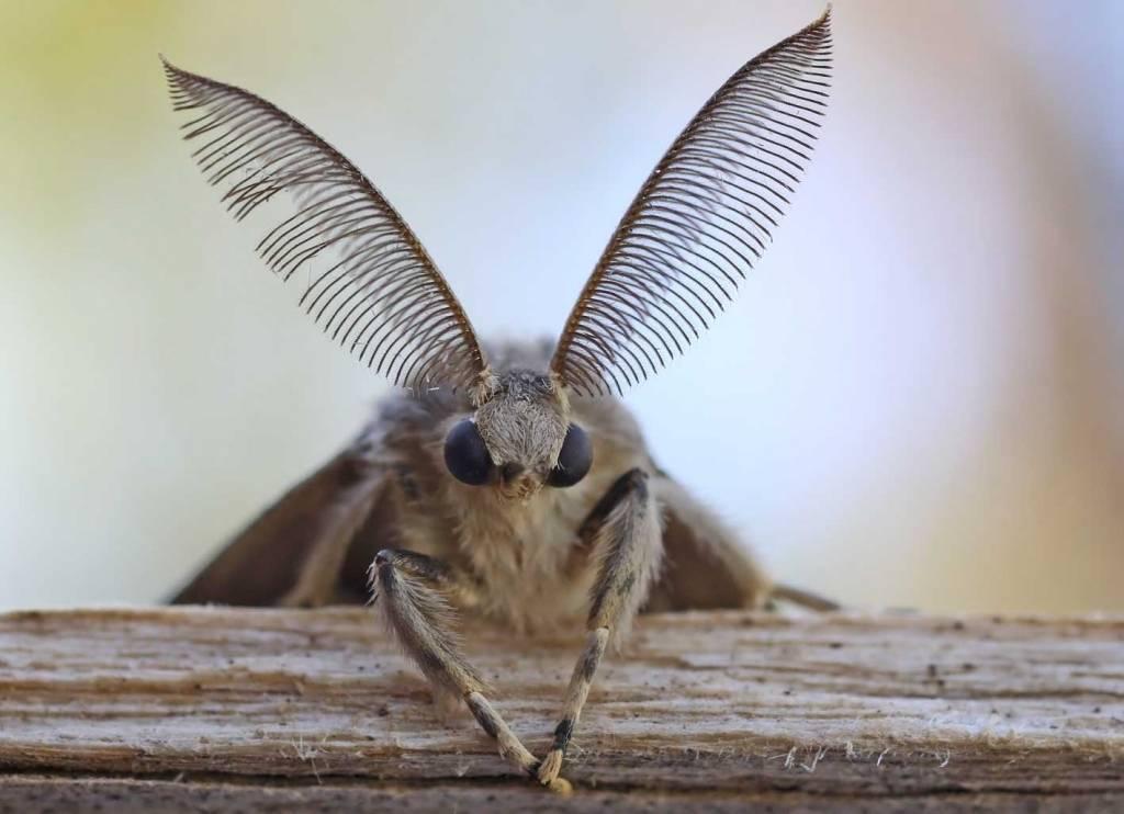 Боязнь насекомых и жуков — как называется фобия