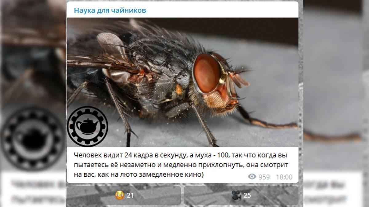 В чем разница между камерой и человеческим глазом? - hi-news.ru