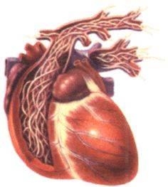 Паразиты в сердце человека: симптомы, лечение, фото
