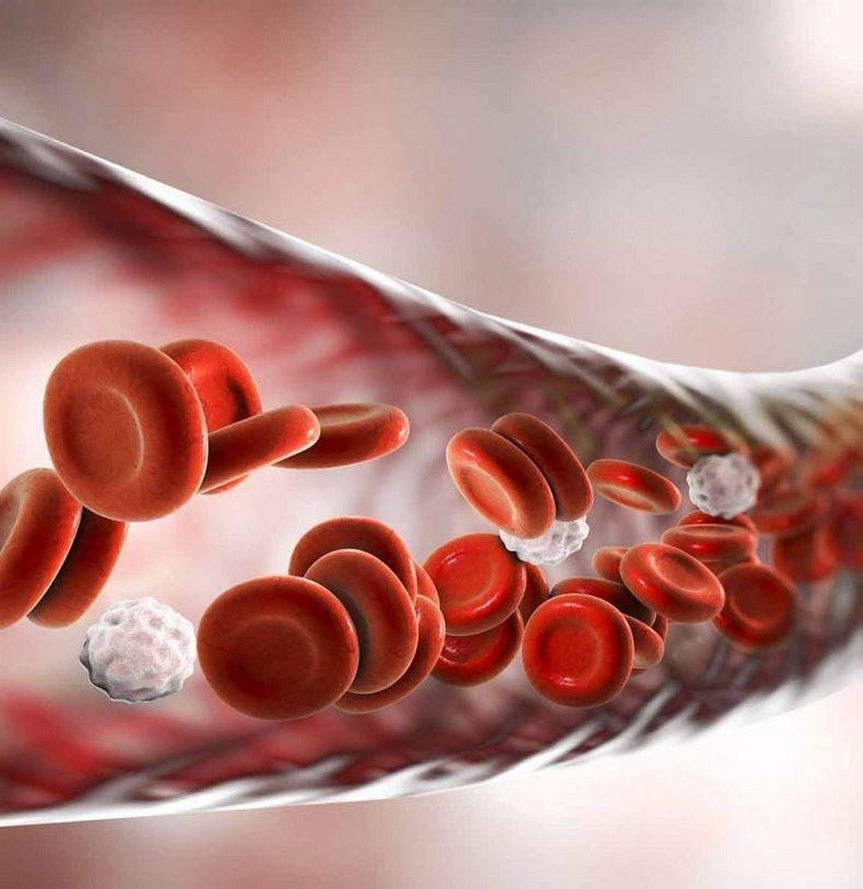 Паразиты в теле человека. симптомы и признаки присутствия паразитов
