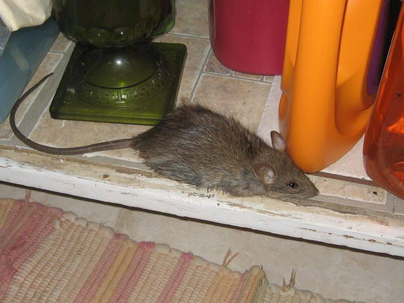 Боязнь животных: причины, виды и лечение зоофобии