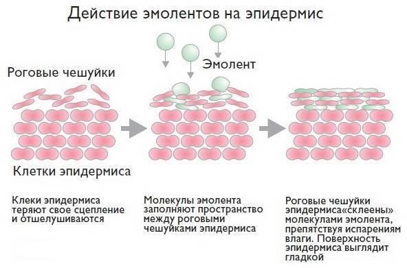 Список препаратов эмолентов при атопическом дерматите у детей