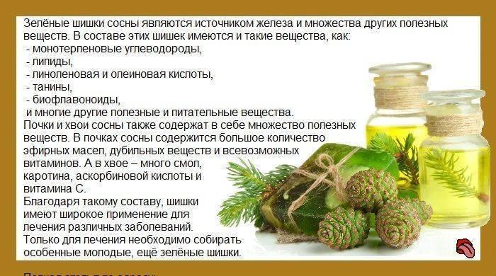 Сосновые почки от кашля - рецепт