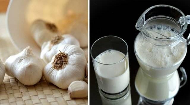 Как пить шалфей с молоком от кашля