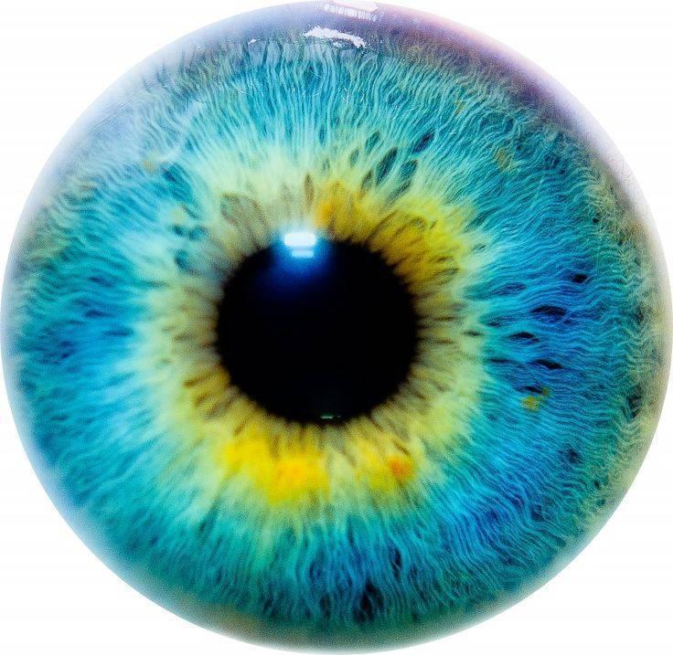 радужка глаз