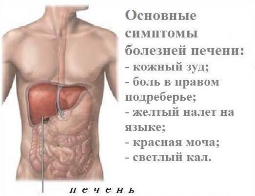 Алкогольная болезнь печени: симптомы, лечение, рекомендации