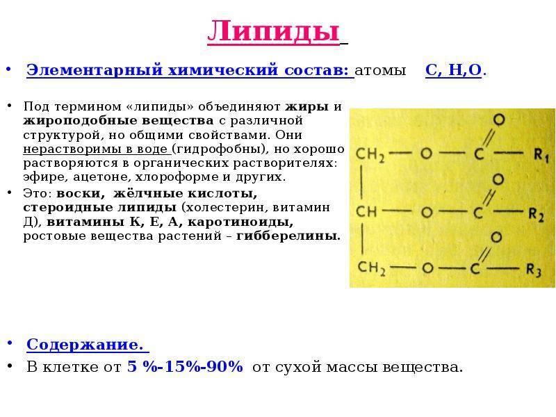Липиды - триглицериды, фосфолипиды и стероиды.