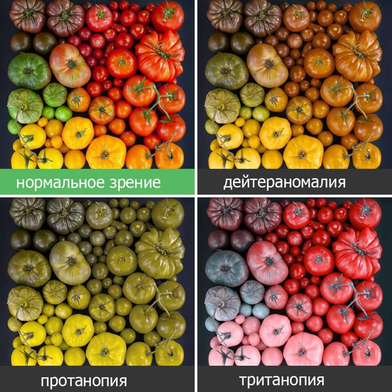 какие цвета не различают дальтоники