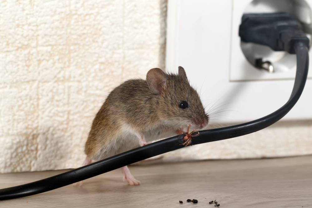 Боязнь рептилий: признаки и методы борьбы с герпетофобией