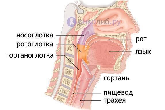 рак носоглотки причины