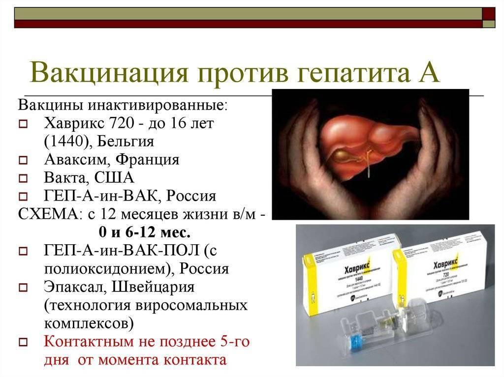 прививка против гепатита а