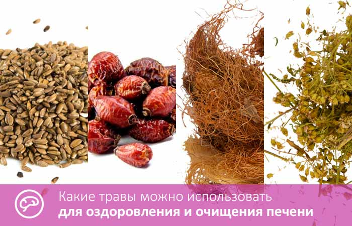 какими травами можно почистить печень и кишечник