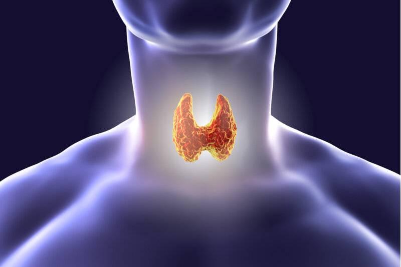 про щитовидную железу