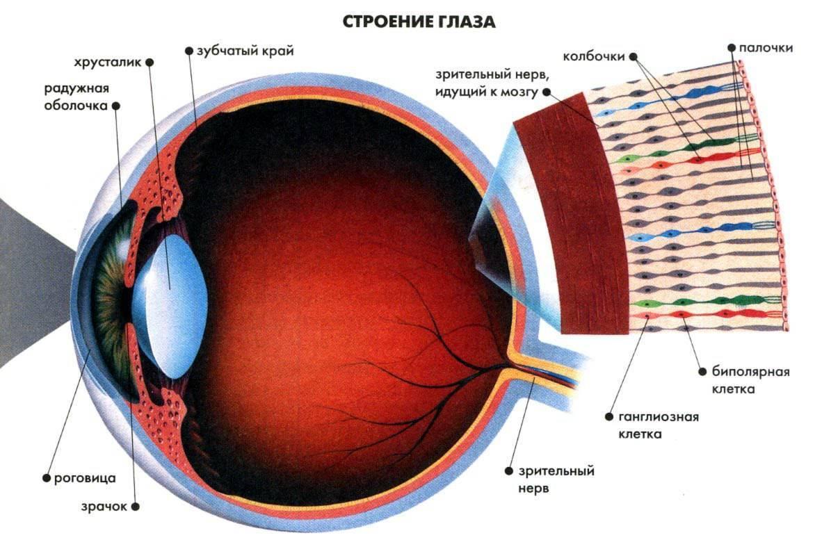 Зрение минус 6