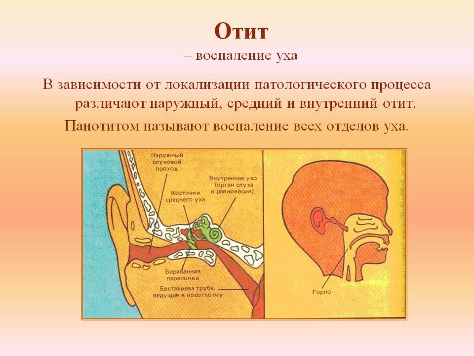 Болезни уха у взрослых: симптомы и лечение, профилактика у людей