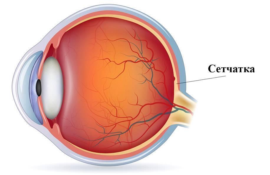 сетчатка глаз