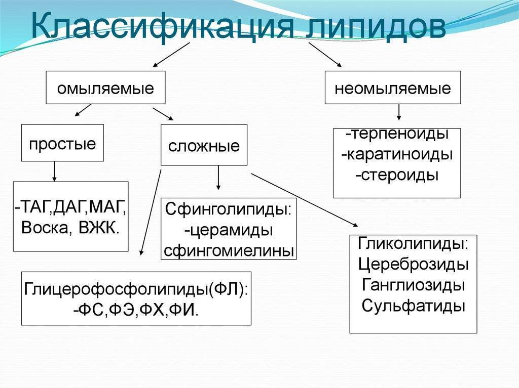 - переваривание - биохимия