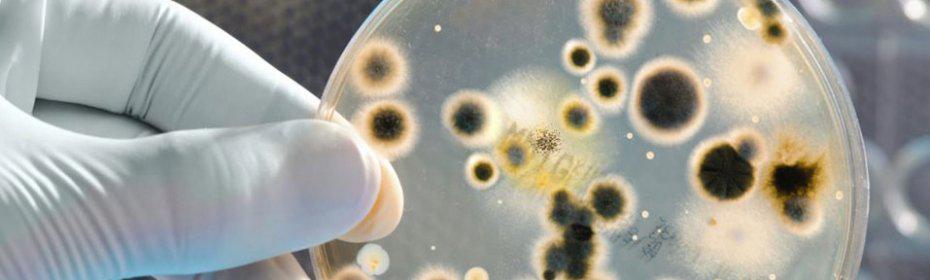 Ureaplasma spp: вопросы гинекологии и советы по лечению
