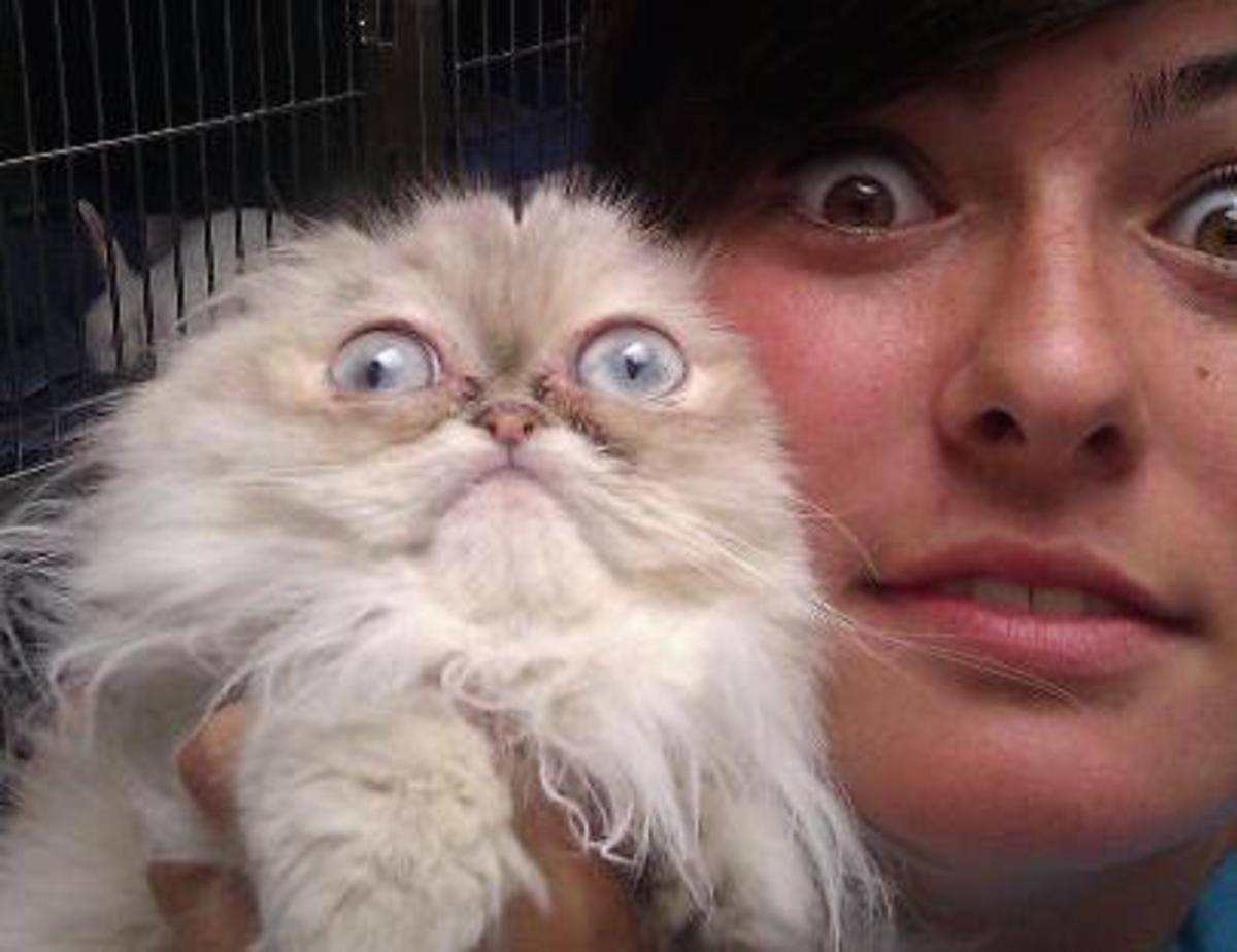 Айлурофобия – страх кошек