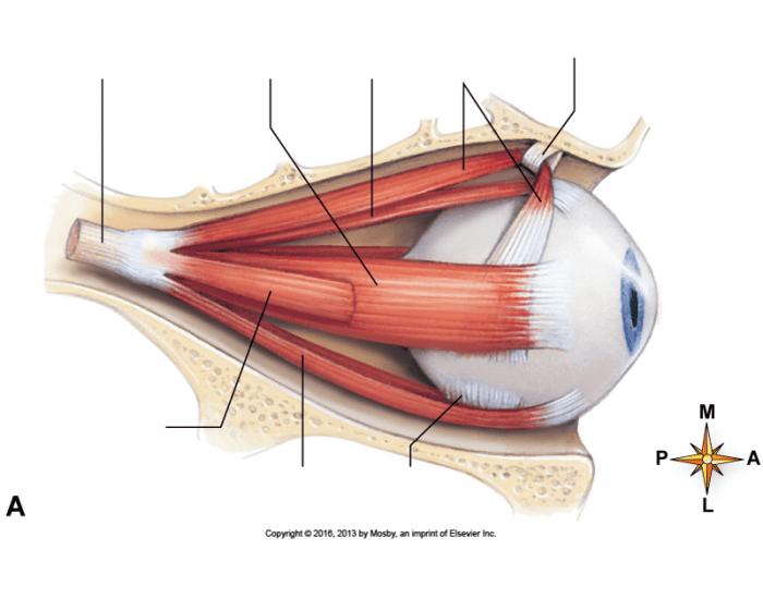 Как снять напряжение мышц глаз