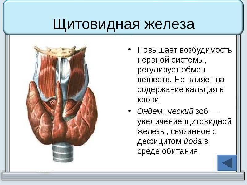 Лечение щитовидной железы при высоком давлении и