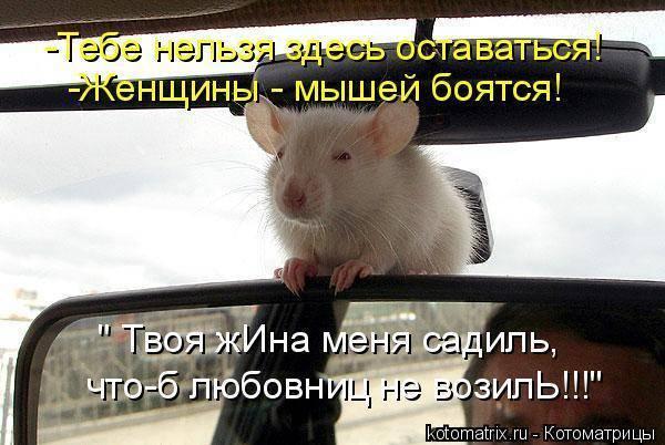 Боязнь мышей: описание недуга и способы избавления