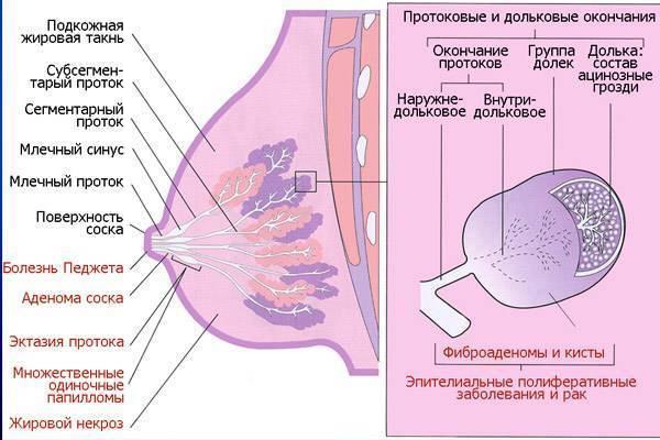 питание при раке молочной железы 4 стадии