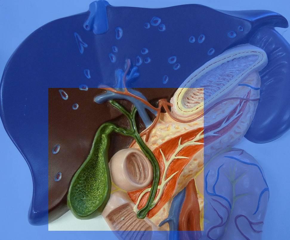 Симптомы и лечение дисфункции желчного пузыря