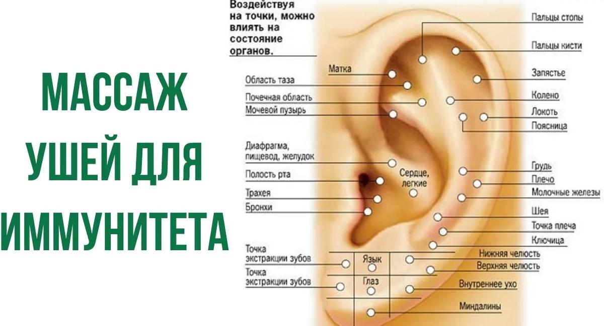 акупунктура уха