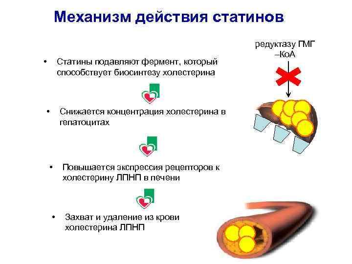 Препараты статины для снижения холестерина