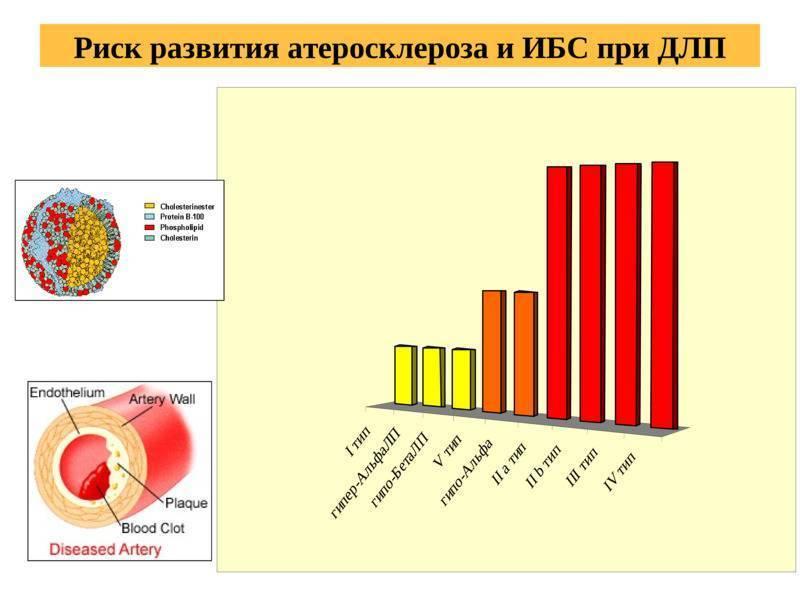 Атеросклероз сосудов: развитие, проявления и локализации, диагностика, как лечить