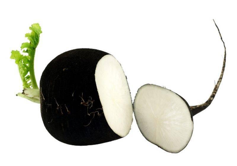 Лечение гайморита черной редькой
