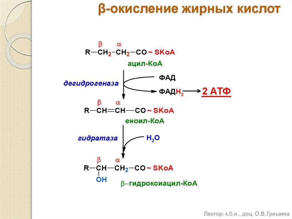 Методичка по бх ов_пол. перекисное окисление липидов в норме и патологии. ферментативное звено антиоксидантной системы защиты