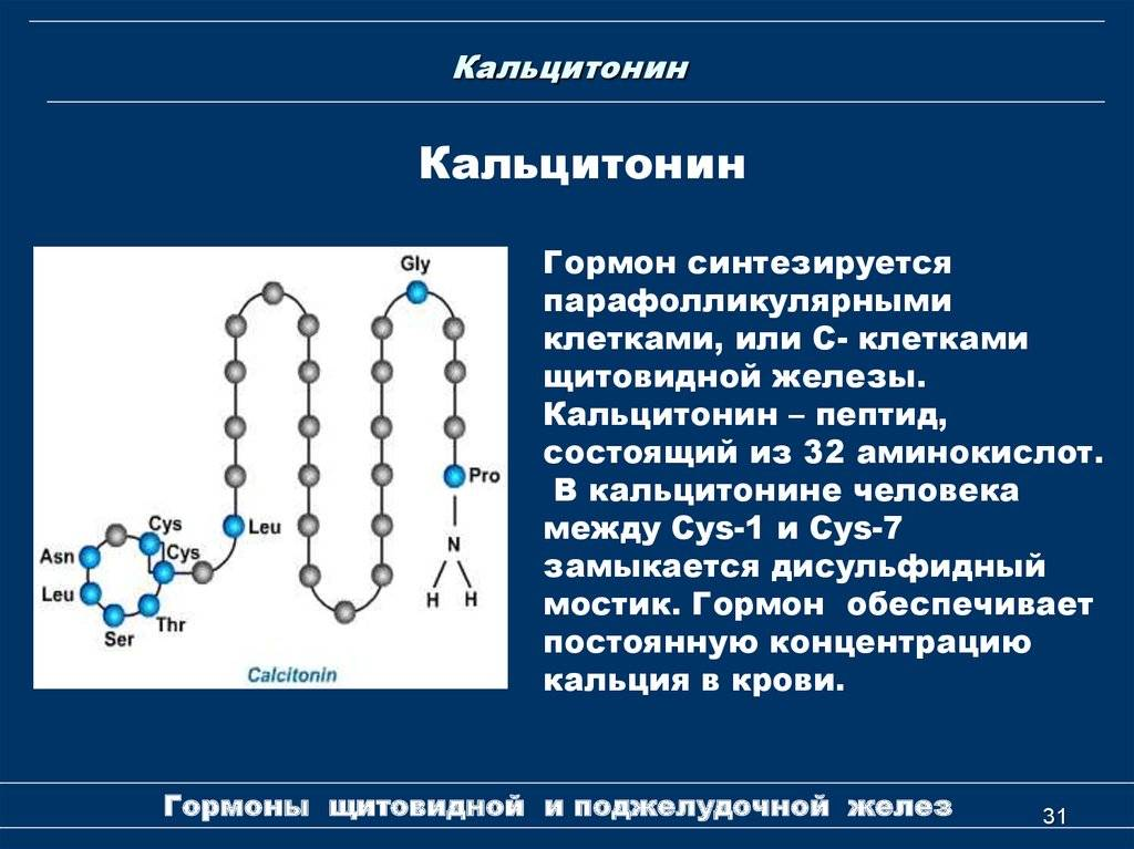 кальцитонин гормон щитовидной железы
