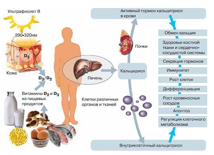 как в печени вырабатывается холестерин