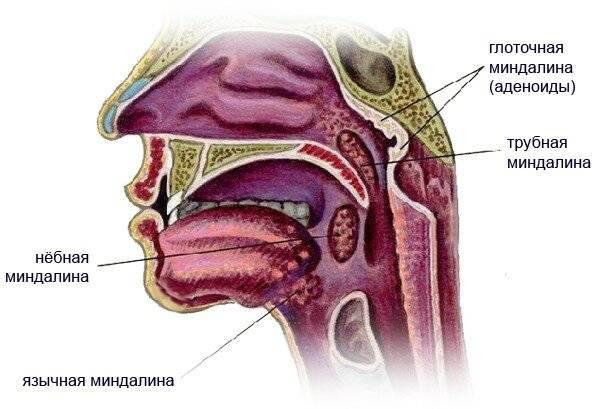 Воспаление язычной миндалины фото