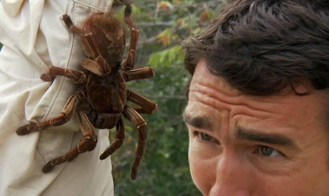 Арахнофобия (боязнь пауков): возможные причины и особенности лечения