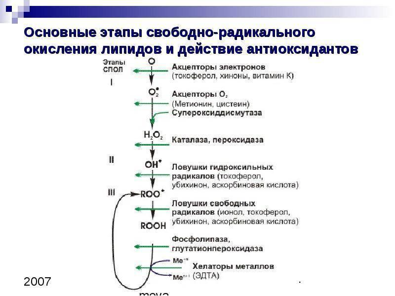 Методичка по бх ов_пол - перекисное окисление липидов в норме и патологии. ферментативное звено антиоксидантной системы защиты