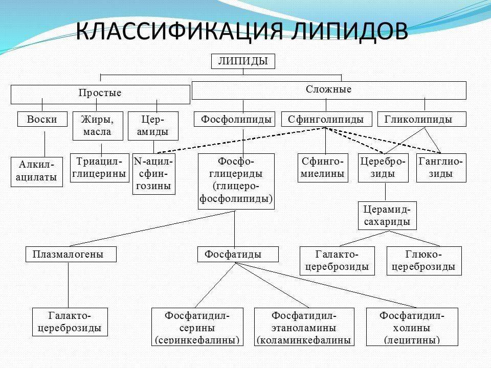 классификация липидов биохимия