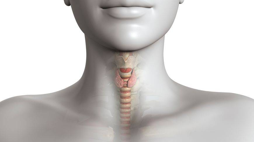 Удушье при щитовидке | pro shchitovidku
