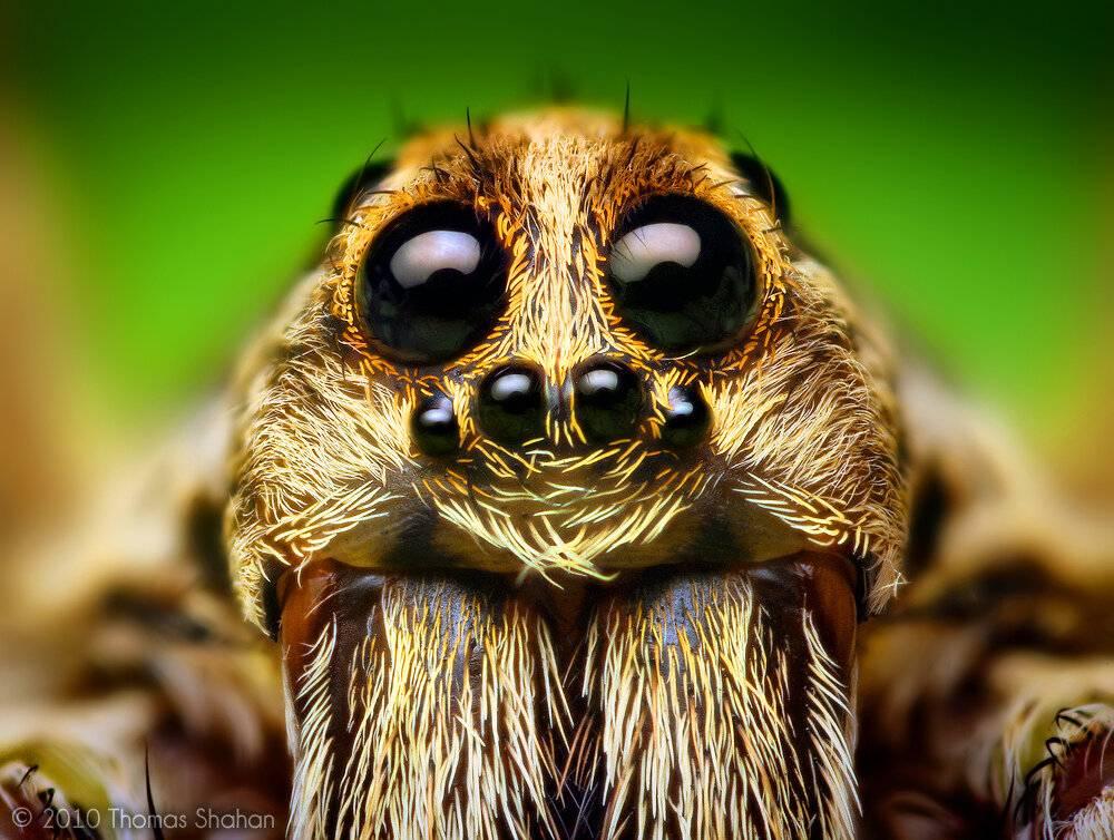 Арахнофобия: что это такое? как избавиться от боязни пауков? каковы симптомы арахнофобии?