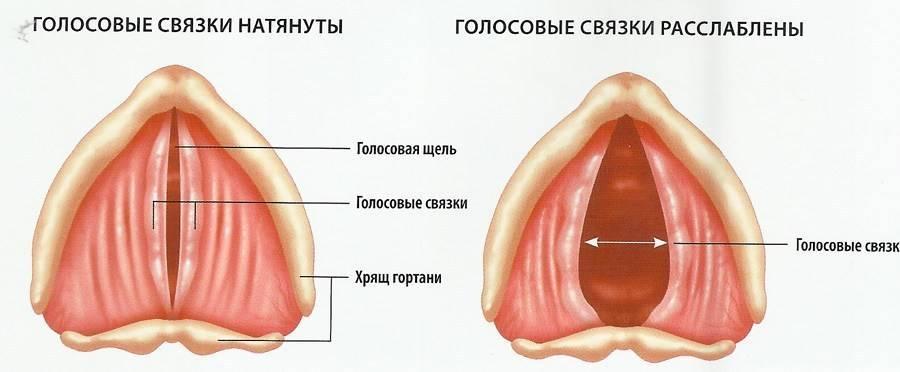 Как вылечить связки горла в домашних условиях — лор и простуда